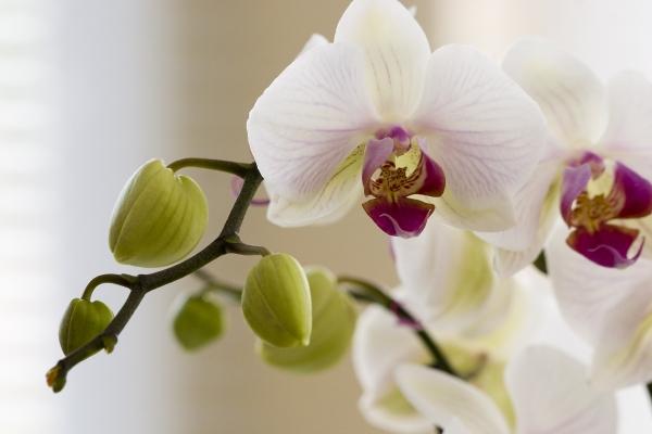 Le orchidee: curiosità e nozioni